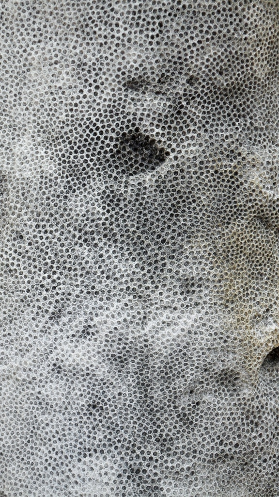 Close-up of coral in the walls of forts, Portobello, Panama