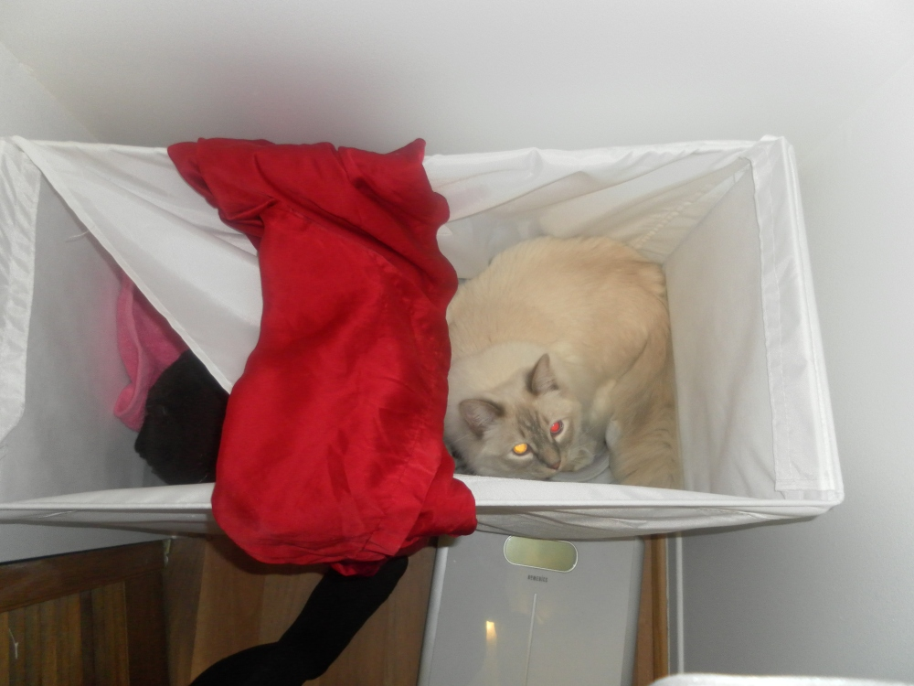 Kitty in the laundry