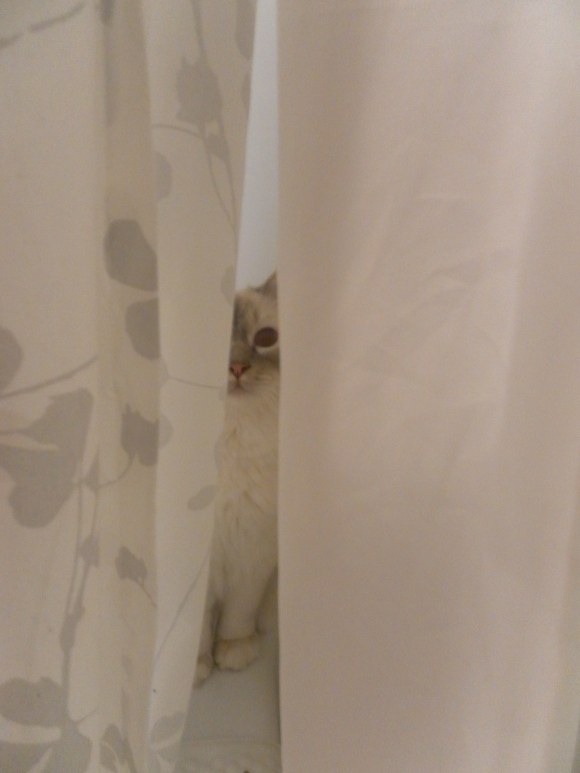 Cute cat hiding in the shower